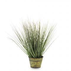 Roślina Dekoracyjna 137208