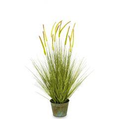 Roślina Dekoracyjna 137203