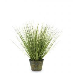 Roślina Dekoracyjna 137207