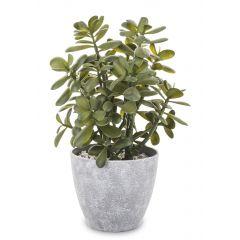 Roślina Dekoracyjna 138483