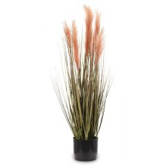 Roślina Dekoracyjna 138480