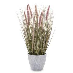 Roślina Dekoracyjna 138479