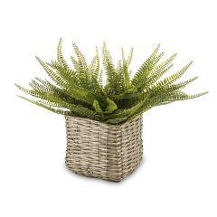 Roślina Dekoracyjna 138484
