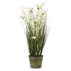 Roślina Dekoracyjna 138482