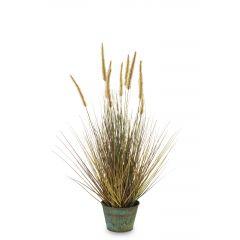 Roślina Dekoracyjna 137198